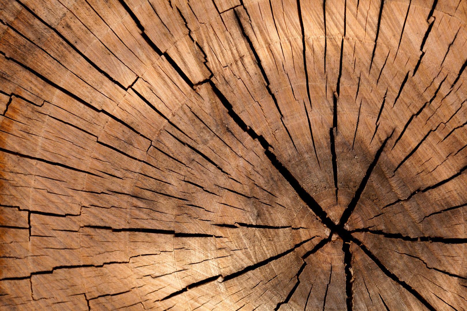 wood-nature-pattern-texture-40973_01